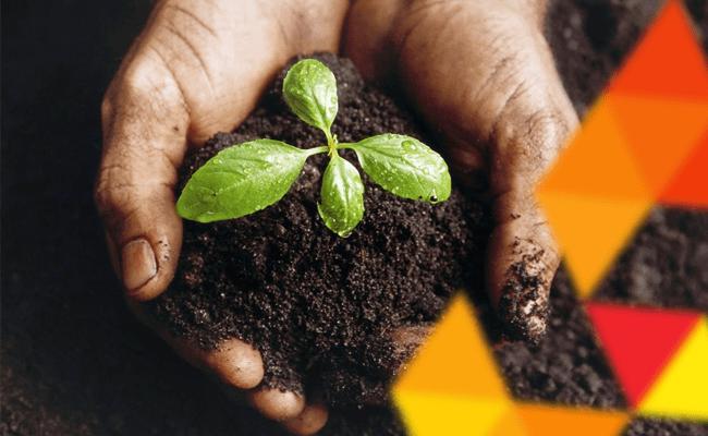 Sustentabilidade desde o plantio.
